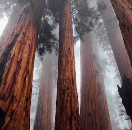 zero point, source, essence, energy, redwoods, trees, sequoia