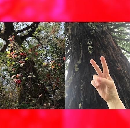 guardian, inner child, love, heart, portal, soul, redwood, Susan Lacerra, redwood tree, peace, poison oak, oak tree